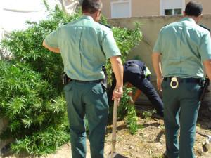 consejos legales para el cultivo de marihuana