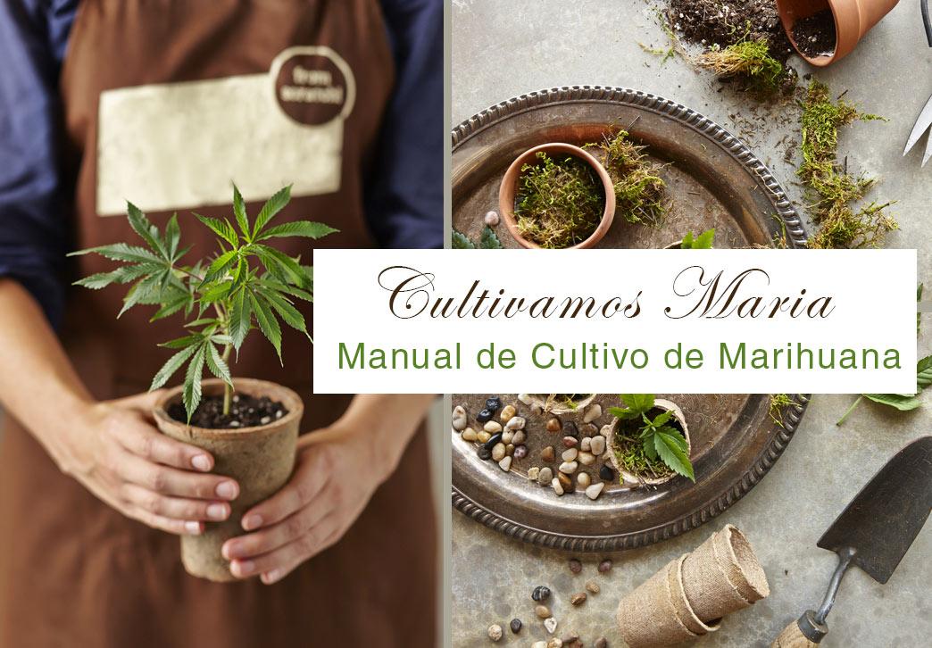 cultivo-marihuana-como-hacer-manual