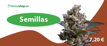 Comprar semillas feminizadas en Growshop.es