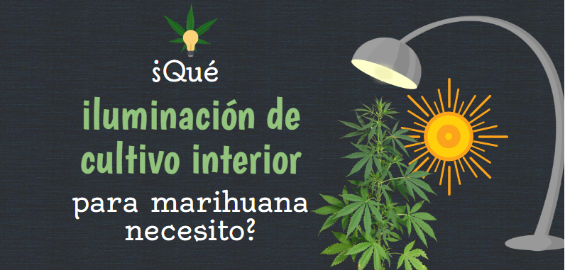 Qu iluminaci n de cultivo interior para marihuana for Kit de cultivo de interior